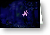 Pink Dawn Greeting Cards - Flower Greeting Card by Moaan