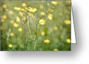Buttercups Greeting Cards - Flower of a buttercup in a sea of yellow flowers Greeting Card by Joana Kruse