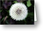 Fall Photographs Greeting Cards - Flower Of Flash Greeting Card by Mark Ashkenazi