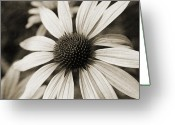 Flower Blossom Greeting Cards - Flower of Old Greeting Card by Karol  Livote
