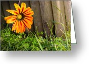 Texture Floral Greeting Cards - Flower on fence Greeting Card by Carlos Caetano