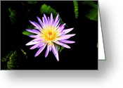 Water Lilly Greeting Cards - Flower Pattern Greeting Card by Steve McKinzie
