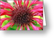 Romanticism Digital Art Greeting Cards - Flower Pink Greeting Card by Mark Ashkenazi