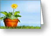 Elements Greeting Cards - Flower pot on the grass Greeting Card by Sandra Cunningham
