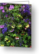 Fushia Greeting Cards - Flower Power Greeting Card by Kurt Van Wagner