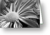 Gallery Art Greeting Cards - Flower Run through It Black and white Greeting Card by James Bo Insogna