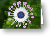 Green Day Greeting Cards - Flower Greeting Card by Simon Anderson