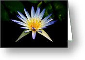 Water Lilly Greeting Cards - Flower Symmetry Greeting Card by Steve McKinzie