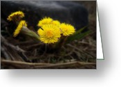 Feed Greeting Cards - Flower Weed Greeting Card by Svetlana Sewell