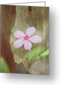 Image Overlay Greeting Cards - Flower with Tropical Tree 2009 Greeting Card by Joseph Duba