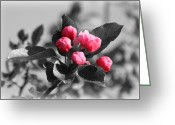 Beauty Mark Greeting Cards - Flowering Crabtree in Select Color Greeting Card by Mark J Seefeldt