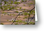 Merced County Greeting Cards - Flowering dogwood alongside the Merced River  Greeting Card by Nancy Hoyt Belcher