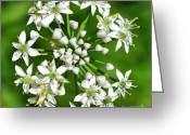 Tiny Flowers Greeting Cards - Flowering Garlic Chives Greeting Card by Kaye Menner
