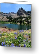 Water Bloom Greeting Cards - Flowering Lake Blanche - Wasatch Mountains Greeting Card by Gary Whitton