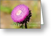 Imported Greeting Cards - Flowering Thistle Plant in Utah Greeting Card by Gary Whitton