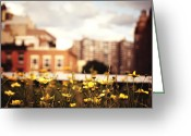 Nyc Cityscape Greeting Cards - Flowers - High Line Park - New York City Greeting Card by Vivienne Gucwa