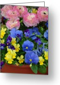 Flowers Flowers And Flowers Greeting Cards - Flowers 116 Greeting Card by Joyce StJames
