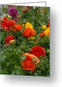 Flowers Flowers And Flowers Greeting Cards - Flowers 155 Greeting Card by Joyce StJames