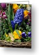 Flowers Flowers And Flowers Greeting Cards - Flowers 179 Greeting Card by Joyce StJames