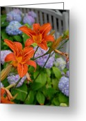 Long Beach Island Photos Greeting Cards - Flowers 263 Greeting Card by Joyce StJames