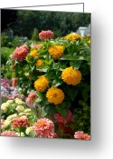 Flowers Flowers And Flowers Greeting Cards - Flowers 92 Greeting Card by Joyce StJames