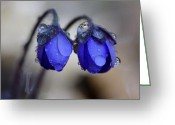 Calendar Greeting Cards - Flowers fresh rain droplet Greeting Card by Romeo Koitmae