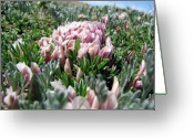Tiny Flowers Greeting Cards - Flowers in the Alpine Tundra Greeting Card by Amanda Barcon