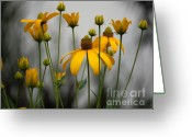 Cone Flower Greeting Cards - Flowers in the rain Greeting Card by Robert Meanor