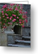 Planter Greeting Cards - Flowers On The Steps Greeting Card by Mary Machare