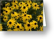 Flowers Of Nature Greeting Cards - Flowers On The University Greeting Card by Joel Sartore