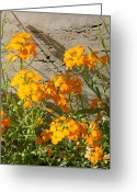 Appleton Museum Of Art Greeting Cards - Flowers Orange 2 Greeting Card by Warren Thompson