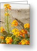 Appleton Museum Of Art Greeting Cards - Flowers Orange Greeting Card by Warren Thompson