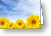 Pollen Greeting Cards - Flowers over Sky Greeting Card by Carlos Caetano