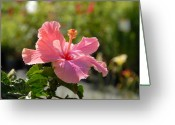 Flowers Flowers And Flowers Greeting Cards - Flowers111 Greeting Card by Joyce StJames