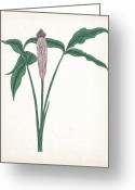 Vulva Greeting Cards - Flowery Greeting Card by Bill Sussman