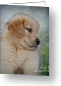 Veterinarian Greeting Cards - Fluffy Golden Puppy Greeting Card by Susan Candelario
