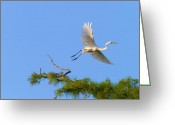 Cypress Digital Art Greeting Cards - Fly Away Egret Greeting Card by J Larry Walker