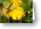 Flowers Pictures Greeting Cards - Fly Away with Me Greeting Card by Venura Herath