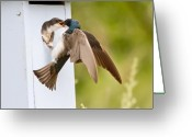 Feed Greeting Cards - Fly In Meal Greeting Card by Carl Jackson