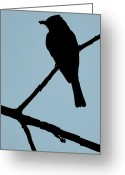 Light Pyrography Greeting Cards - Flycatcher with Bug Greeting Card by Jeffrey Platt