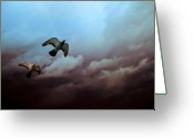 Wildlife Photo Greeting Cards - Flying before the storm Greeting Card by Bob Orsillo