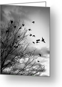 Flock Greeting Cards - Flying birds Greeting Card by Elena Elisseeva