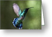 Colorful Birds Photo Greeting Cards - Flying Emerald Greeting Card by Heiko Koehrer-Wagner