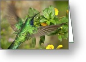 Colorful Birds Photo Greeting Cards - Flying Green Violetear Greeting Card by Heiko Koehrer-Wagner