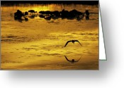 Foraging Greeting Cards - Flying Home - Florida Wetlands Wading BIrds Scene Greeting Card by Rob Travis