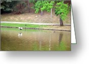 Lake Low Country Greeting Cards - Flying Low Greeting Card by Maria Urso - Artist and Photographer