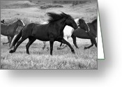 Running Horse Greeting Cards - Flying Mane Greeting Card by MH Ramona Swift