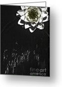 Janie Greeting Cards - Flying Water Lily Greeting Card by Janie Johnson