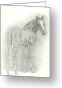 Livestock Drawings Greeting Cards - Foal Greeting Card by Jennifer Nilsson