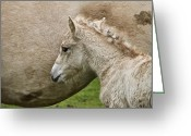 Newborn Greeting Cards - Foal Greeting Card by Odd Jeppesen